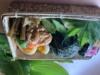 山菜おにぎり弁当800円(要予約)